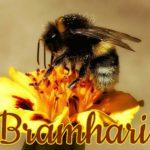 Brahmari
